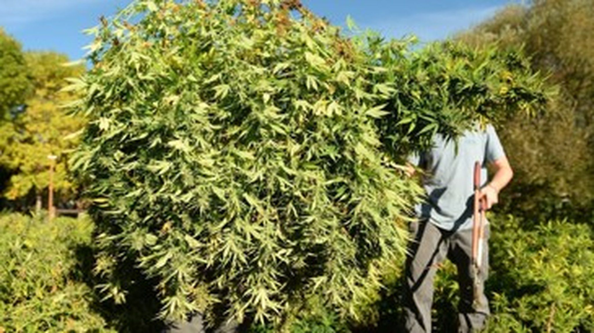 Ohio To Accept Hemp Growing Applications Starting Today