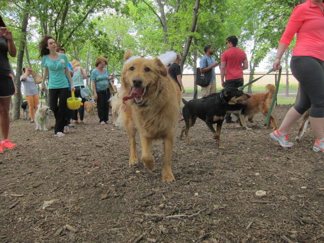 Dog About Town: Sniffing out treats and the Easter Bunny and