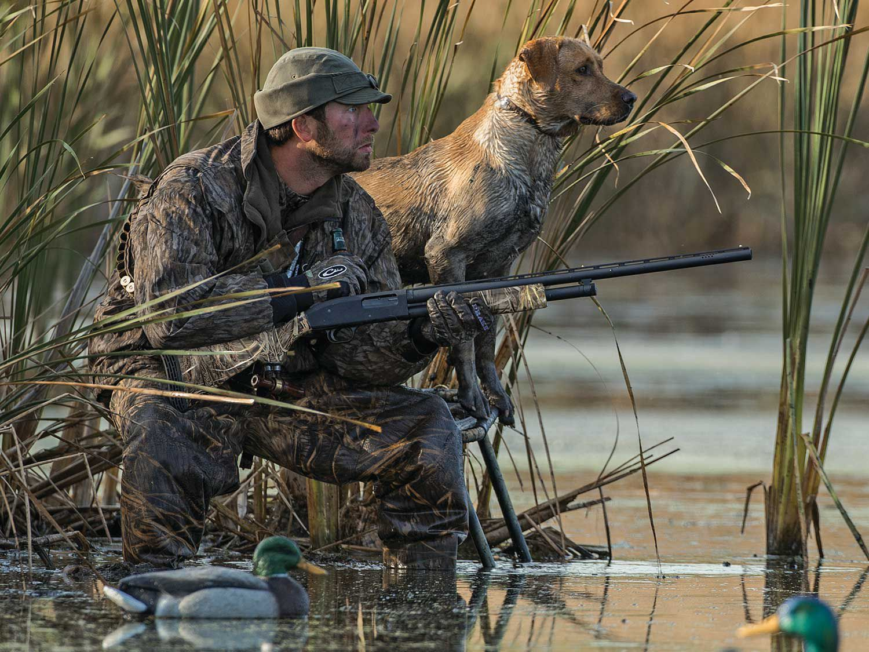 Yellow Lab Duck Hunting