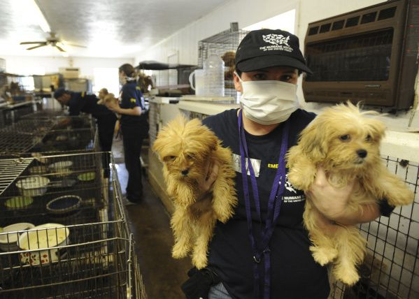Texas licensing law for animal breeders takes effect today