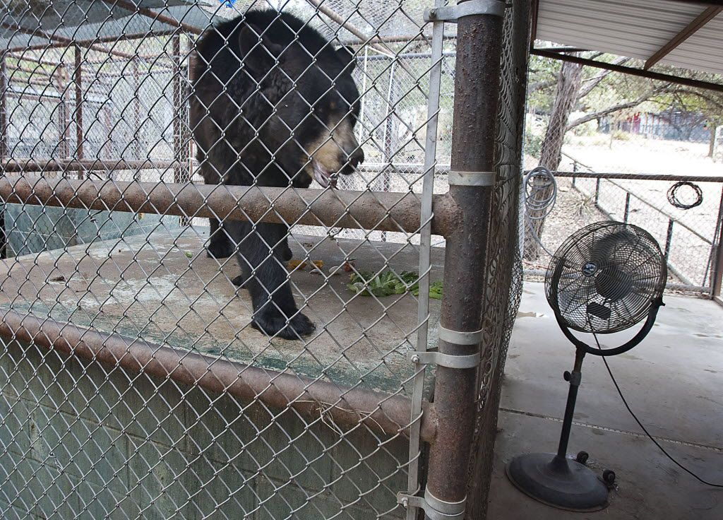 Austin Zoo under fire after reports it mistreated animals