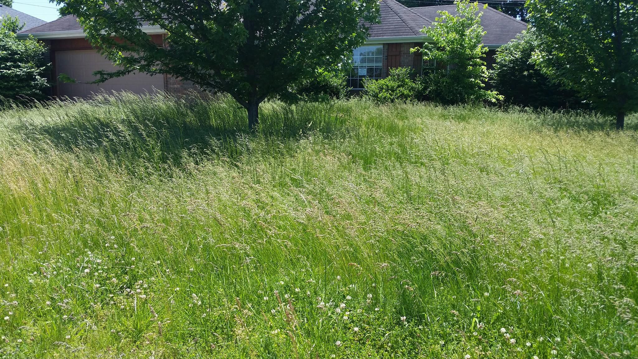 Here S What You Can Do About Your Neighbor S Tall Grass