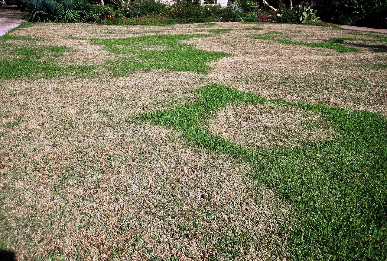 Blotches On Your Grass Here S How To Heal A Diseased Lawn