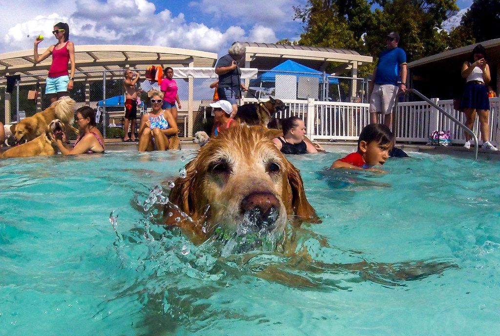 Dogs can swim and splash at these end-of-summer pool parties ...