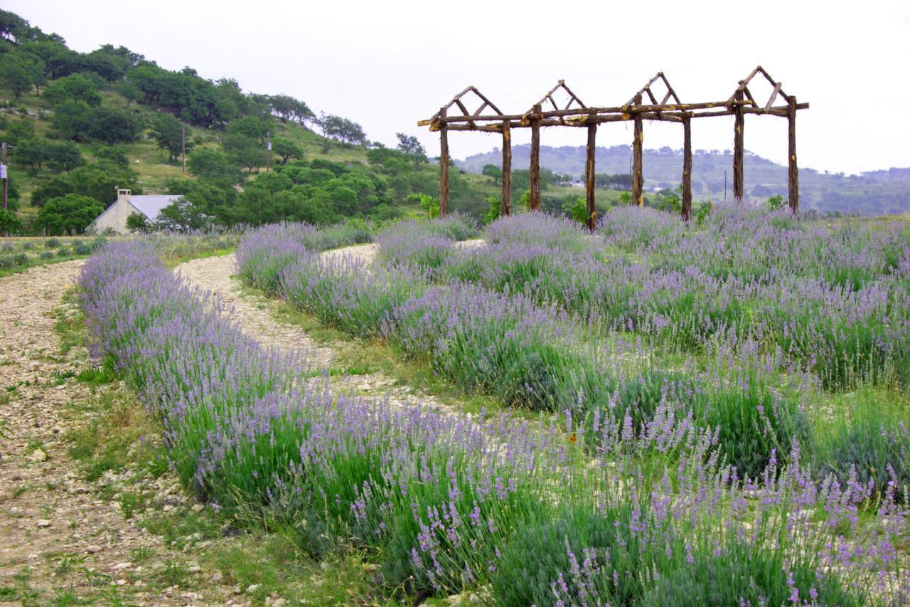 Take the lavender challenge