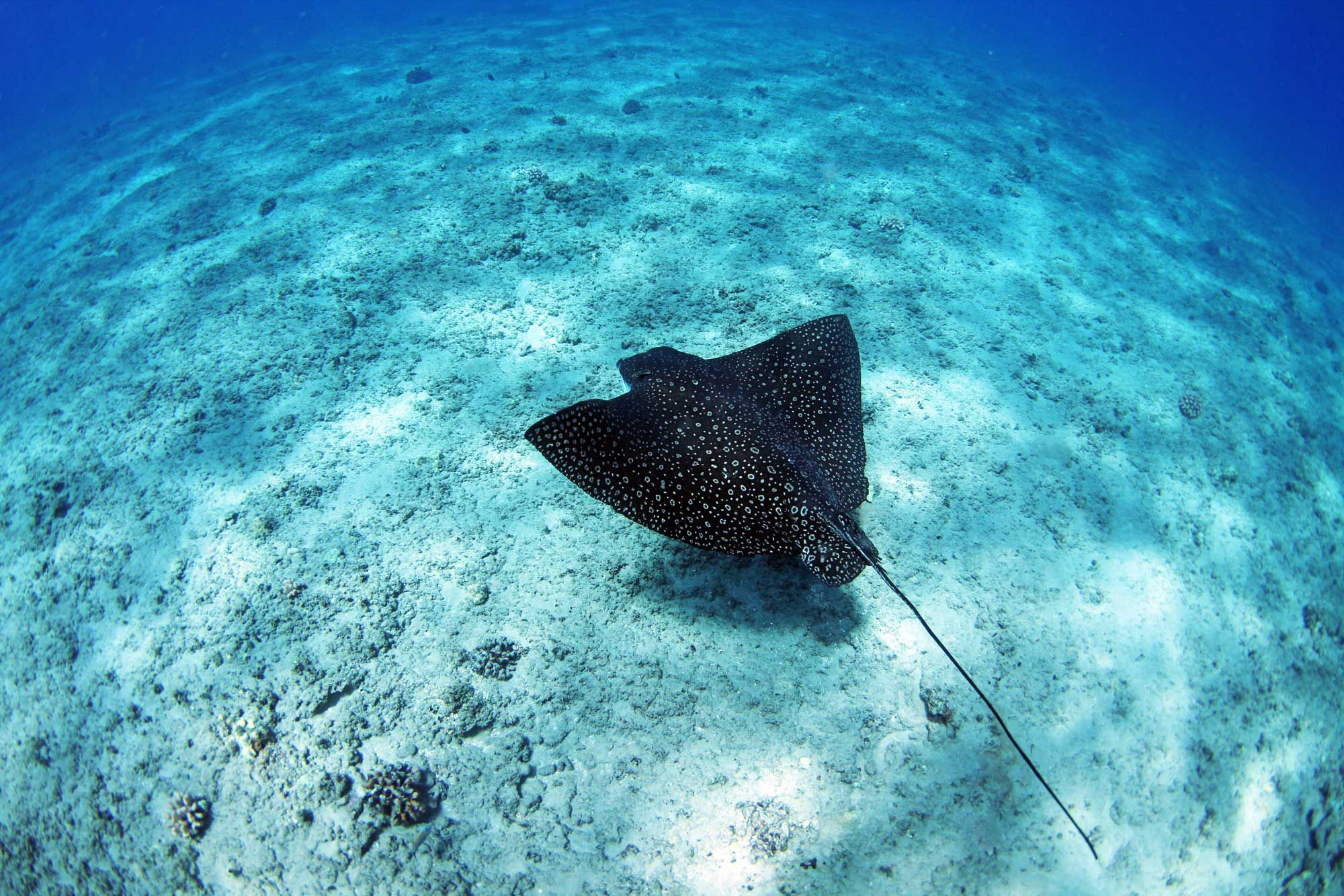 Best Snorkeling in Hawaii, Snorkeling the Hawaiian Islands
