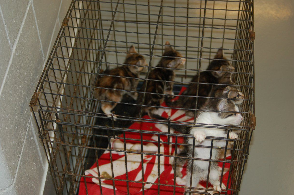 Woman Charged With Animal Cruelty After 111 Malnourished Cats