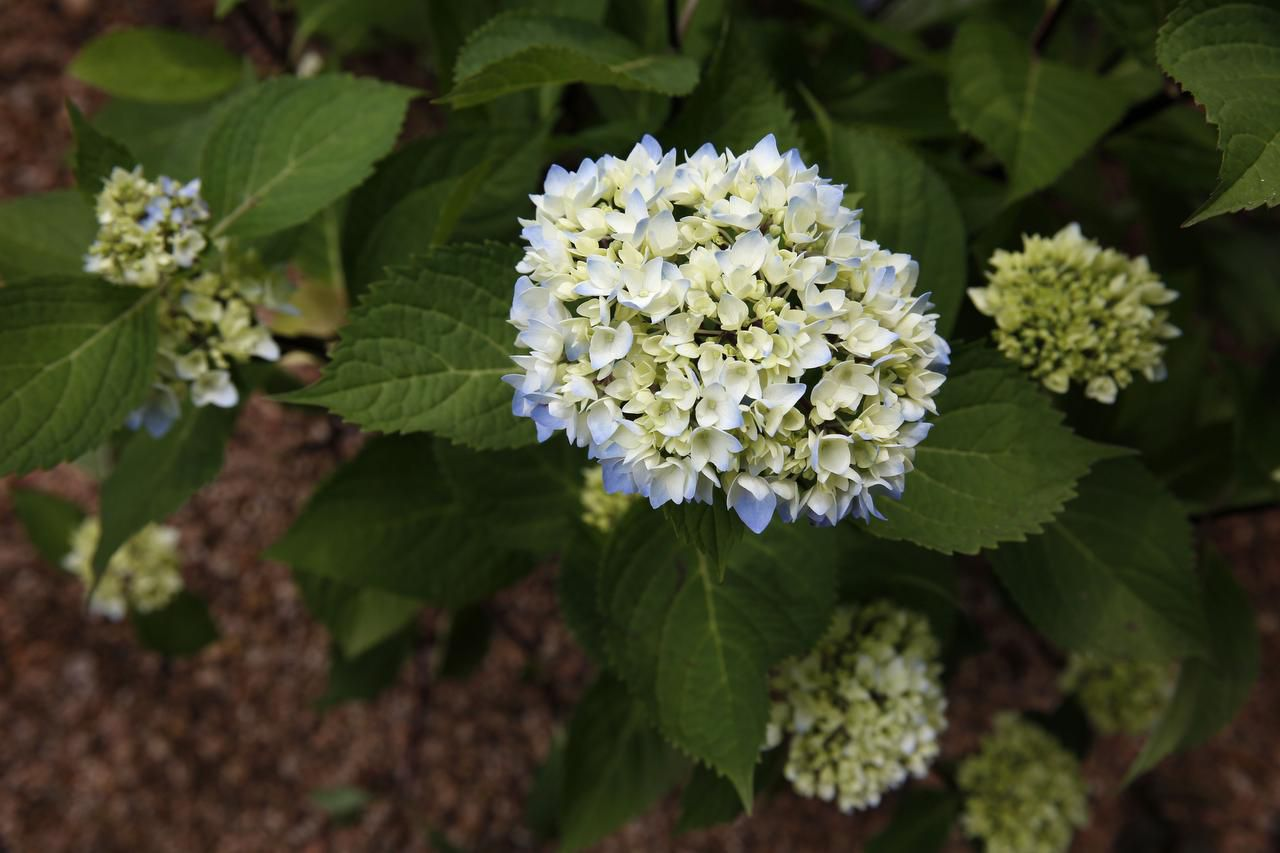 These Dazzling Shrubs Bring Blooms All Summer Long
