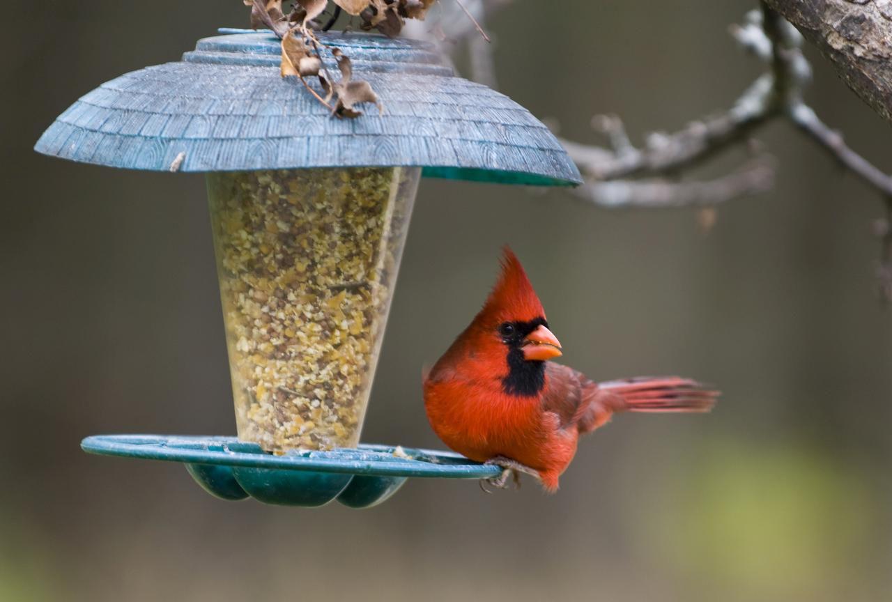 Bird Attracting Natives Coll 2-12 seeds//4 species