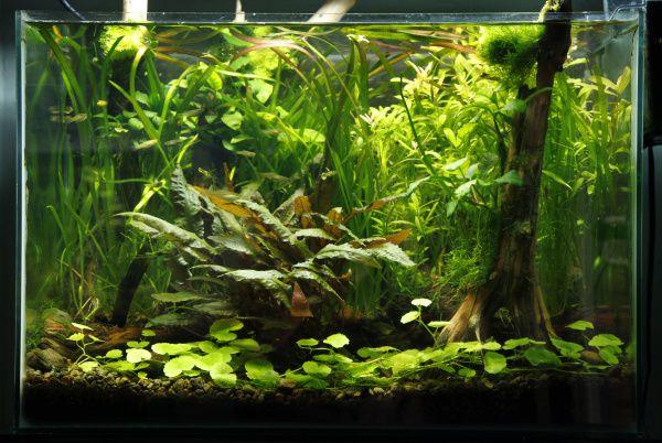 Aquariums that feature plants more than fish