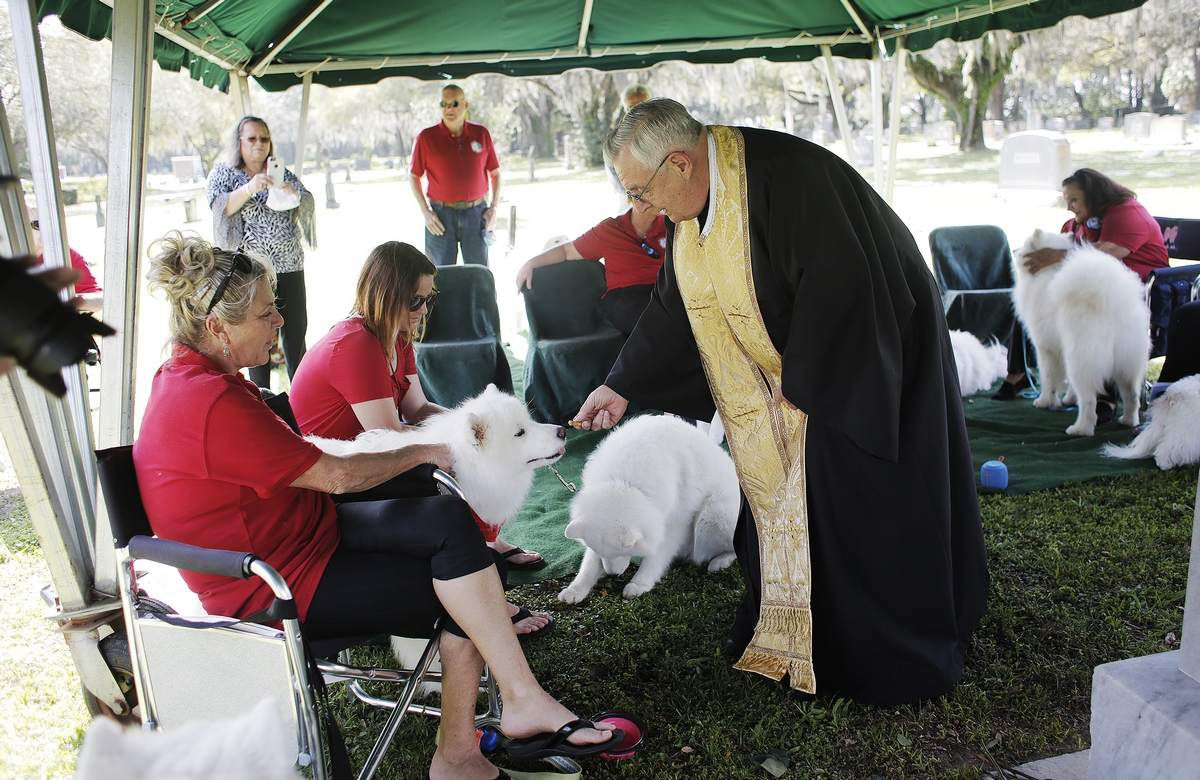 Samoyed fans gather at Tampa grave of Belgian princess who