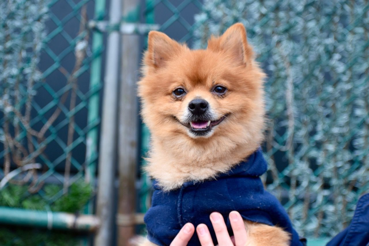 Here Are 11 Wonderful Pets You Can Adopt This Weekend Jan