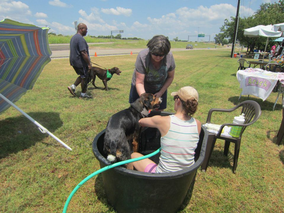 Dog About Town: Splishing and splashing and more things to do
