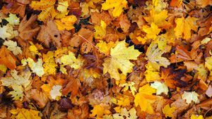 2019 yard waste collection, leaf pick up dates for Metro Detroit