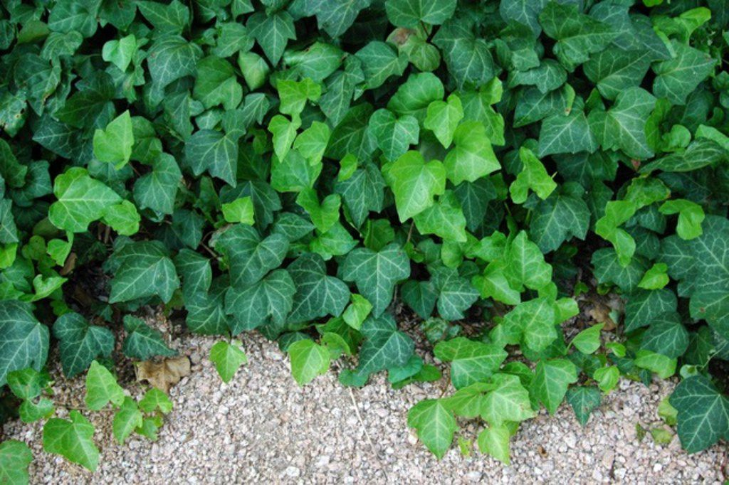 Can T Grow Grass In Your Shady Yard Try These Pretty Ground Covers