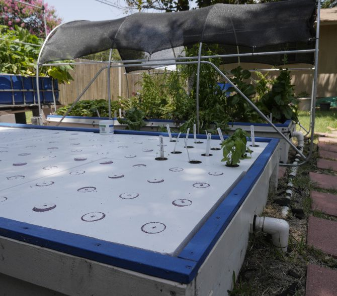 Aquaponics: Another way to byp Dallas area's difficult ... on huge styrofoam raft, aquarium floating raft, aquaponics floating bed, hydroponic floating raft, plastic barrel raft, diy floating raft, commercial hydroponics raft, aquaponics lettuce raft,