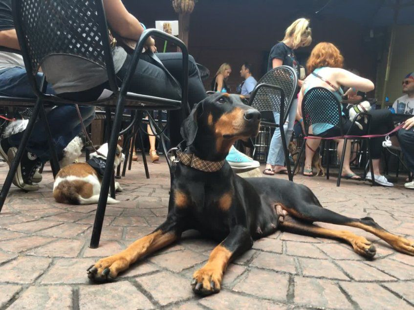 Dog About Town: A fun run, bar hopping and more things to do