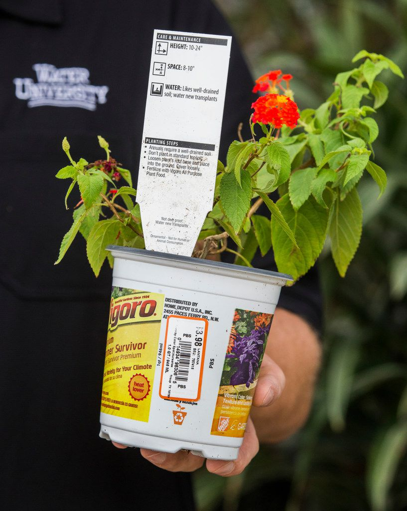 Want to start a garden this fall? Try these planning tips Native Plants In Home Depot on plants in walmart, almanac home depot, plants in amazon, plants in ikea, indigo plant home depot, water home depot, plants at home depot, plants in borders, plants in home office, plants in starbucks, plants in kroger, bedding plants home depot, plant lights home depot, plants in safeway, plants in home garden, bonnie plants home depot,