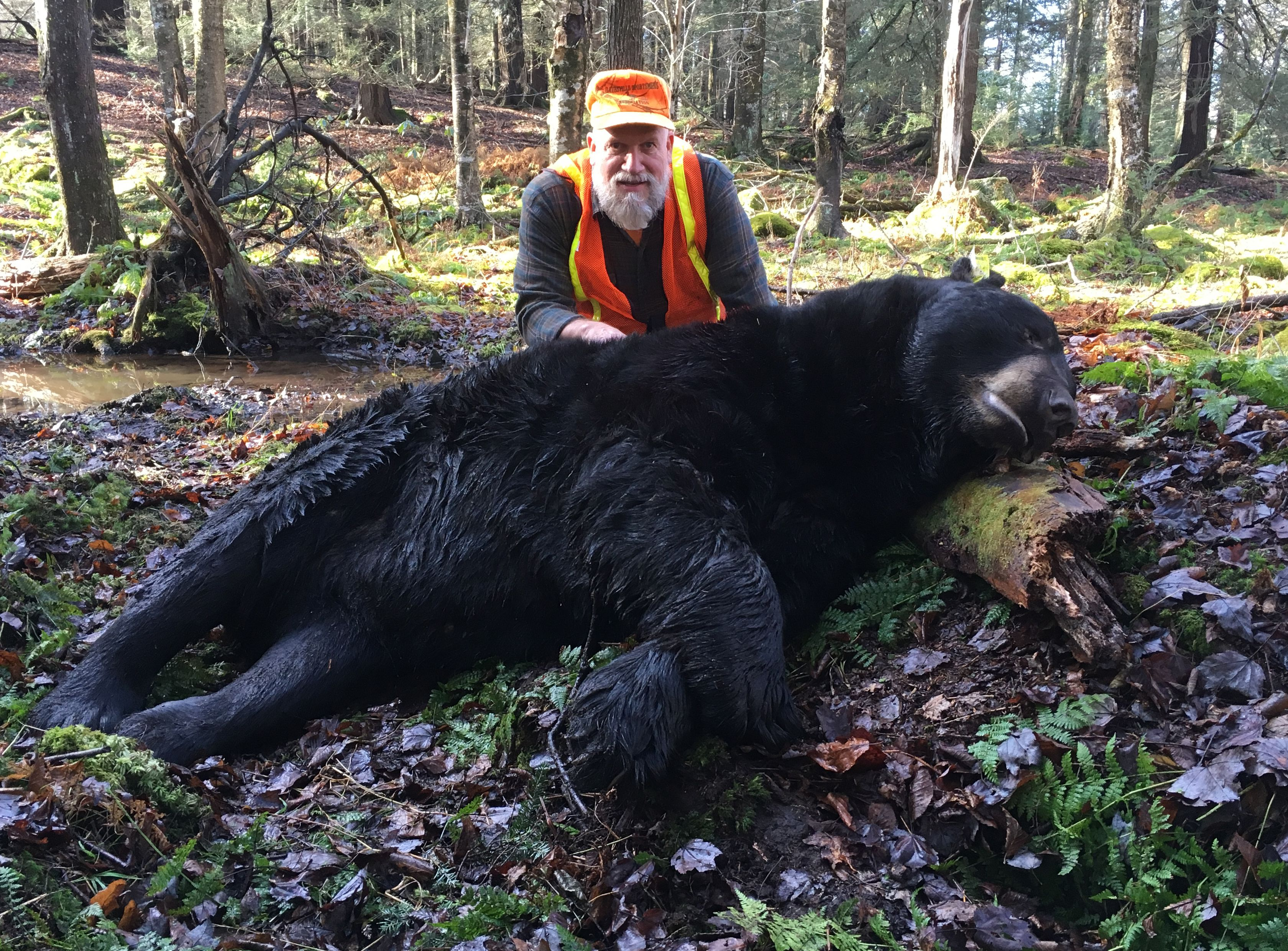 743 Pound Bear Bagged By Nazareth Area Man Is 3rd Biggest This Season In Pa Lehighvalleylive Com The operating system, lock express seamlessly integrates the. lehigh valley live
