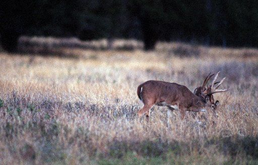 The dos and don'ts of deer hunting season in Texas