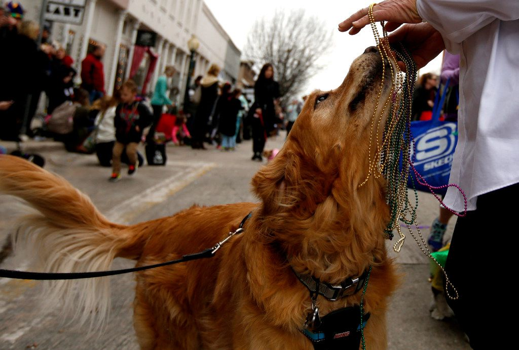 Dog About Town Celebrating Mardi Gras And More Things To Do With