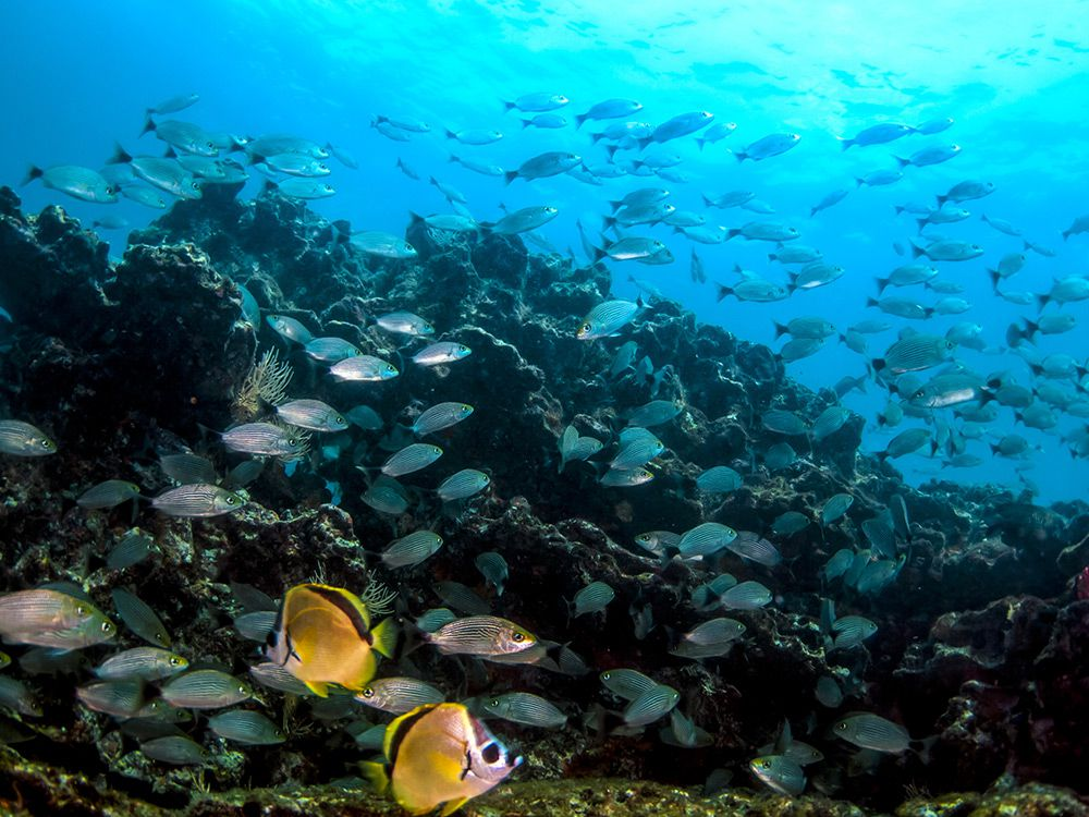 Best Snorkeling Spots in Panama and Costa Rica | Islands on map of orange park florida, map of port st. lucie florida, map of port st. joe florida, map of south walton florida, map of bay county florida, map of lake seminole florida, map of a1a florida, map of palm coast florida, map of destin florida, map of land o lakes florida, map of south west florida, map of st. augustine florida, map of new port richey florida, map of palm springs florida, map of the villages florida, map of palm harbor florida, map of florida beaches, map of palm bay florida, map of walton county florida, map of sandestin florida,