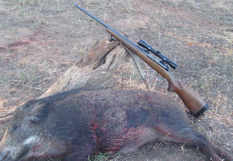 14 Great Hog Hunting Rifles Handguns And Tactics Outdoor Life