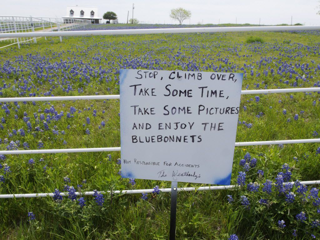 Is it illegal to pick Texas bluebonnets? Curious Texas investigates
