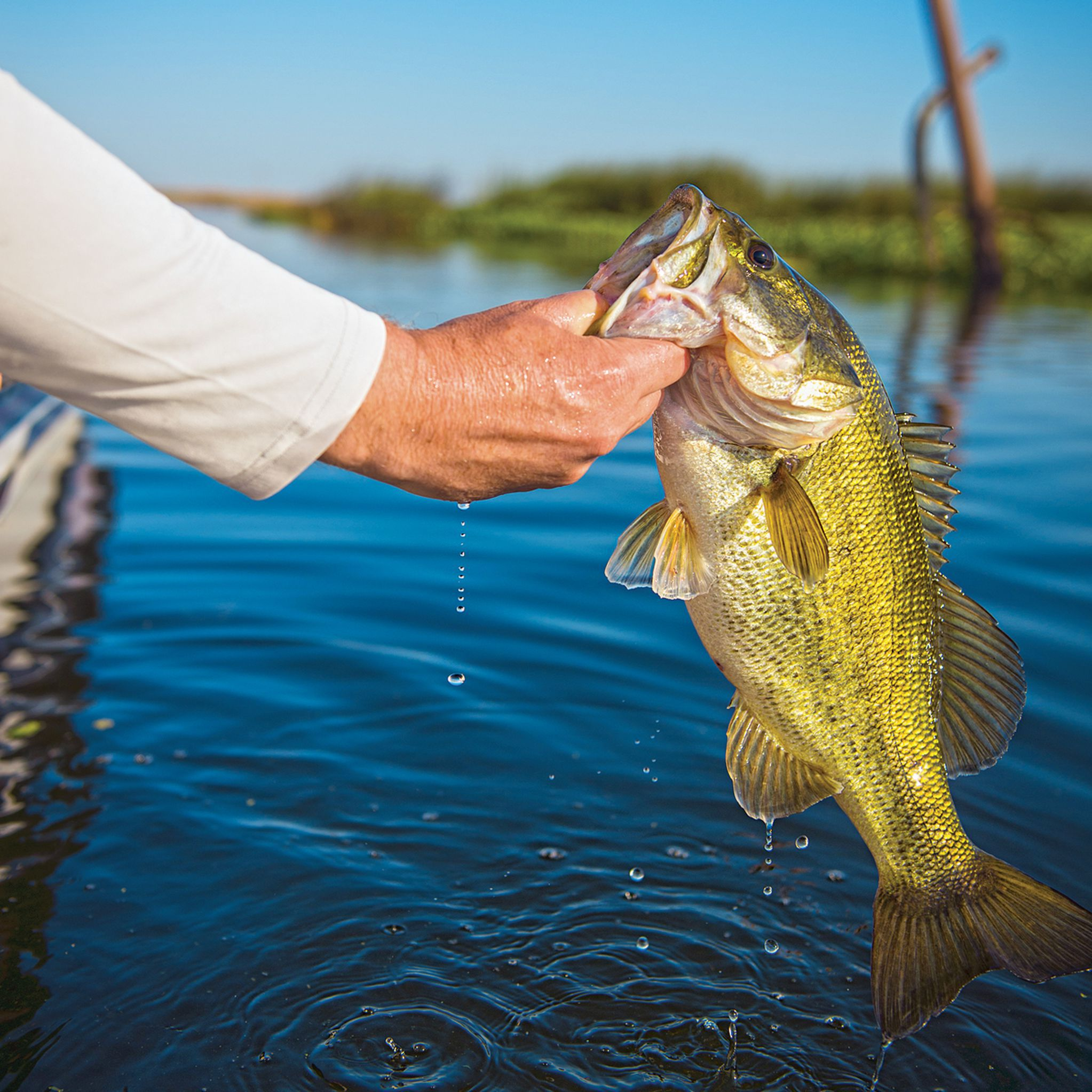 25 Tips For Catching A 10 Pound Bass Field Stream