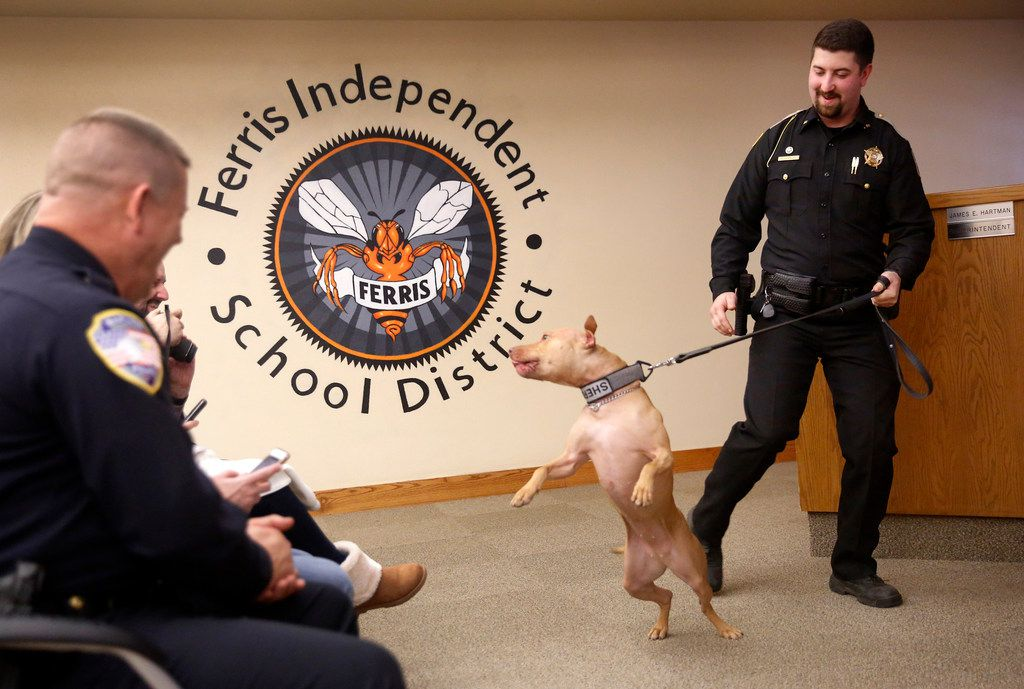 A new breed of police dog: Graduation ceremony in Ferris