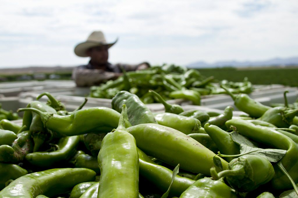 7 places to eat Hatch green chiles in Dallas-Fort Worth
