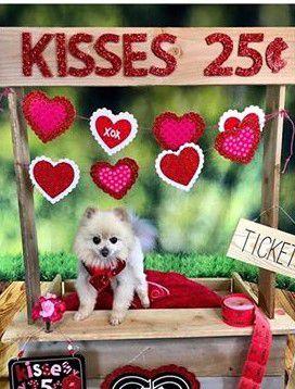 New Holiday Valentines Day Heart Hearts Bandanna human pet dog cat