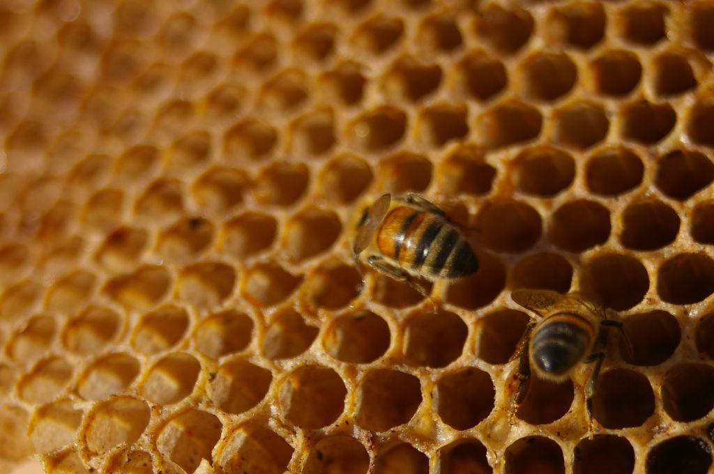 Is Trypophobia A Real Phobia Popular Science