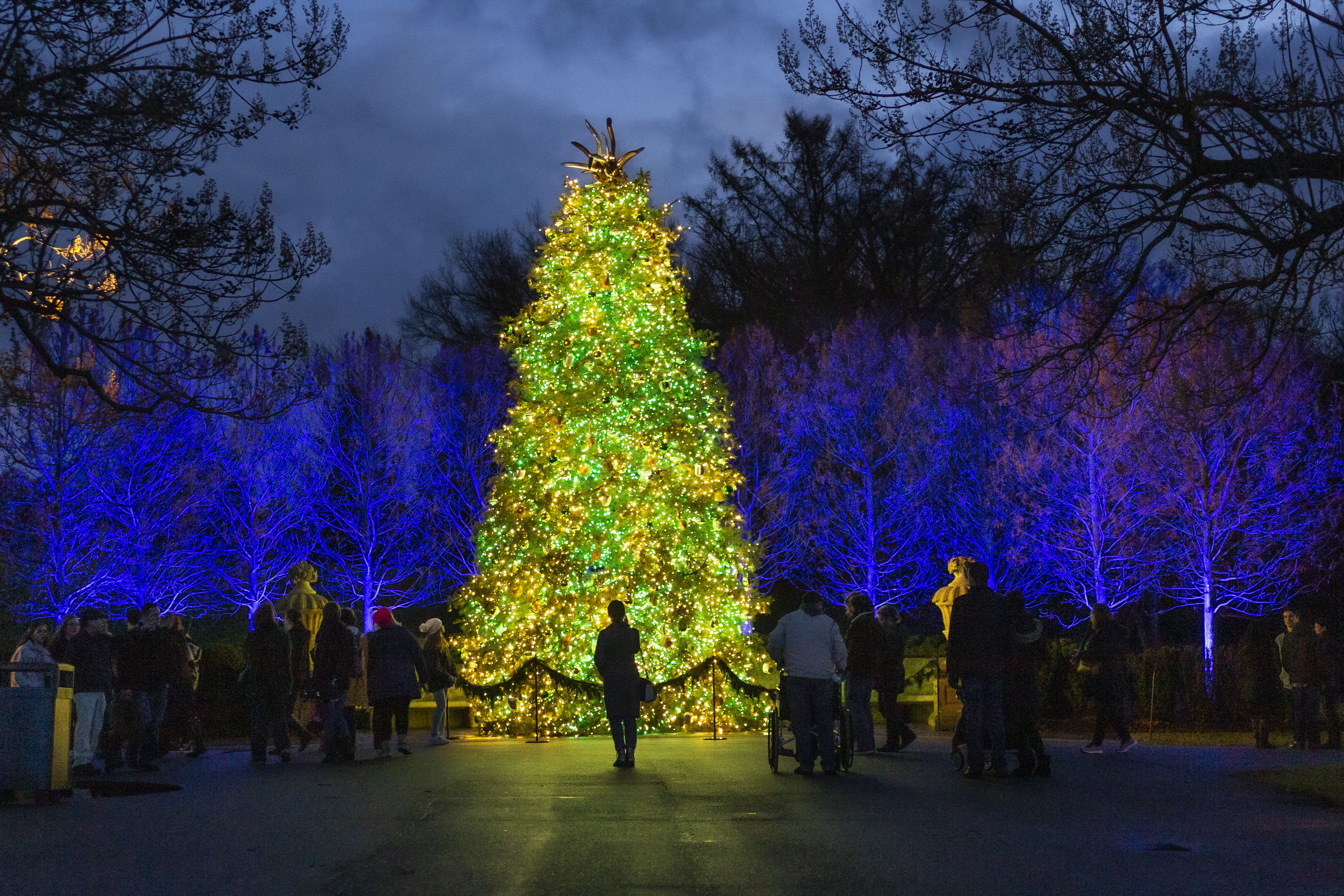 Pittston City Christmas Tree Lighting 2021 28 Of The Best Christmas Light Displays In Pennsylvania Pennlive Com