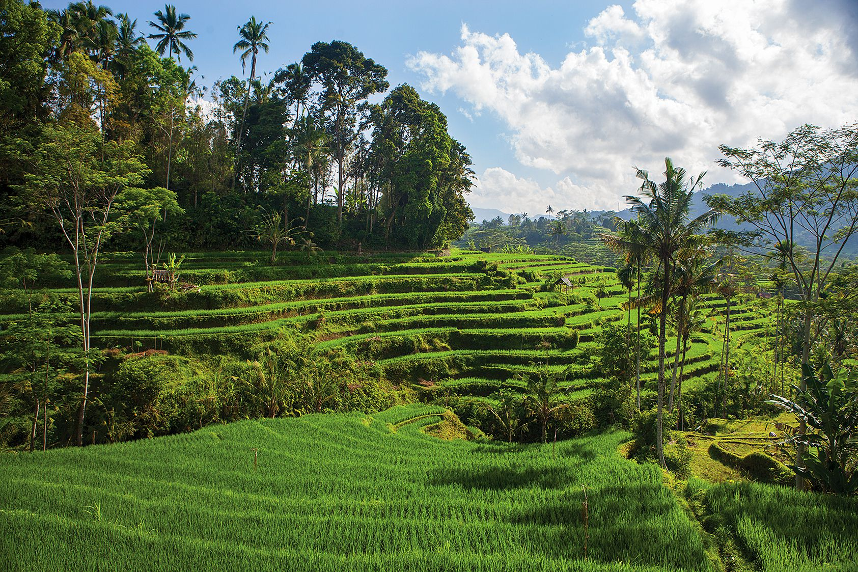 Why the Flight to Bali, Indonesia, Is Completely Worth It