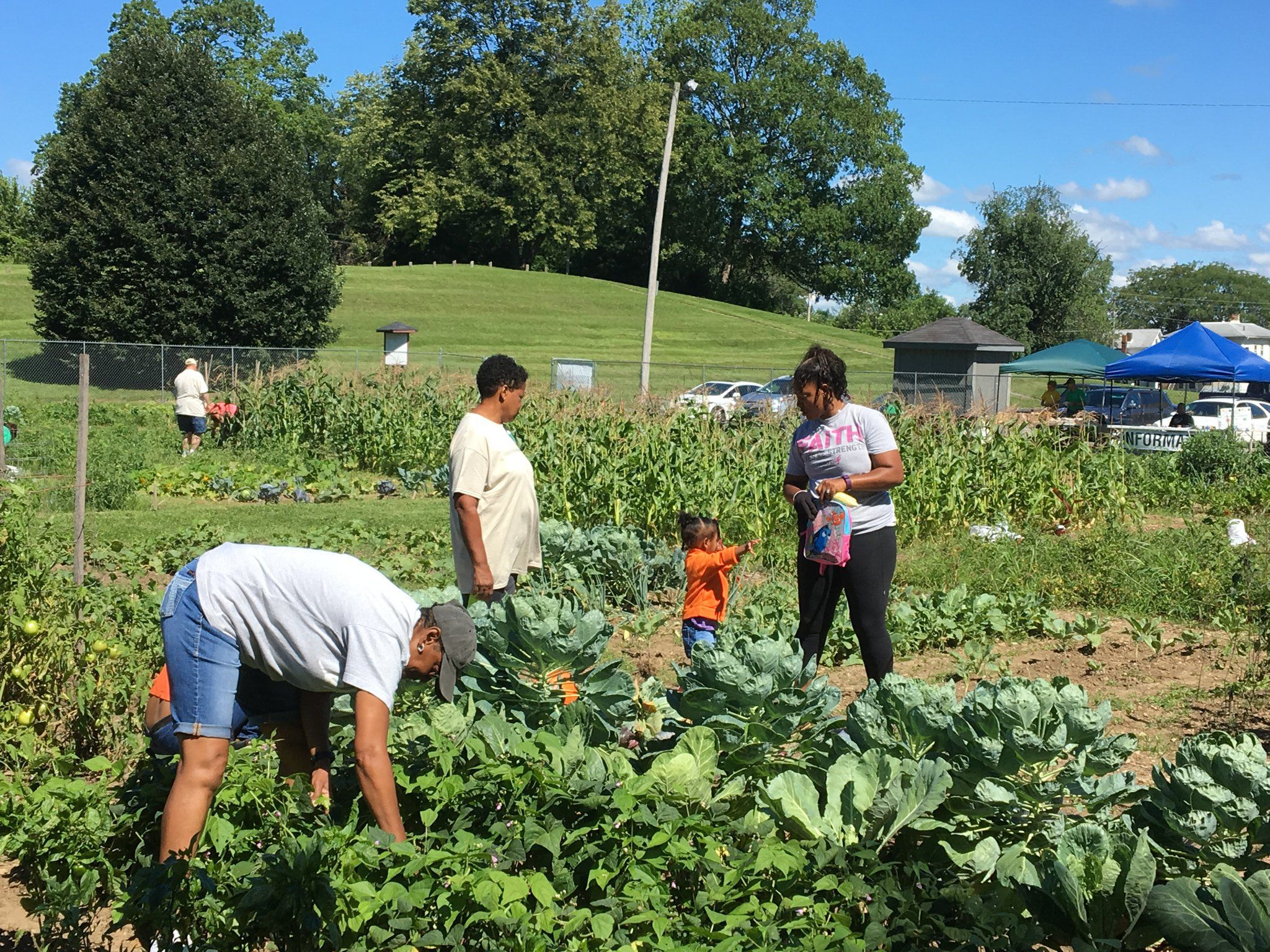 Springfield Community Garden Steps In To Fill Need In Food Desert